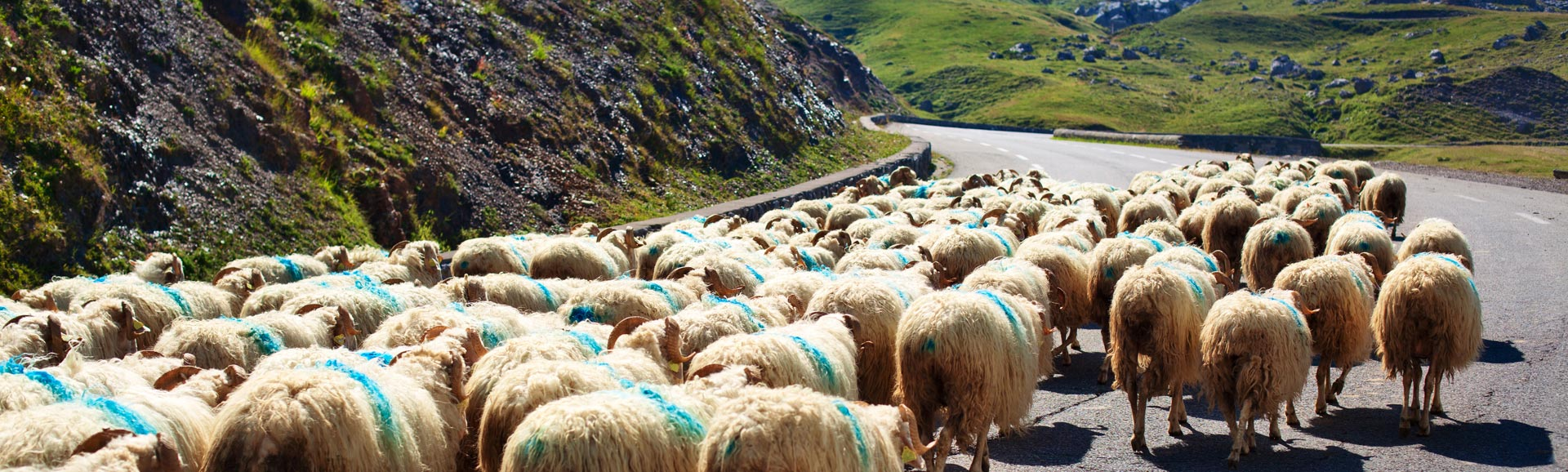 Berühmte Szenerie in Irland - damit muss man rechnen.