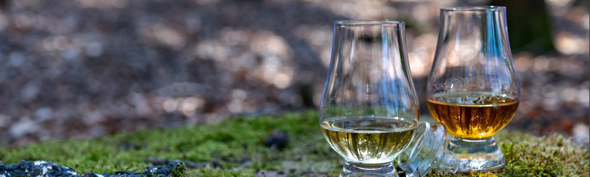 Single Malt Scotch Whisky Logo