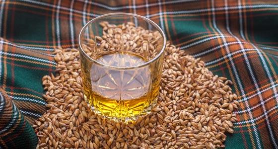 Getreide gehört zum Whisky dazu.